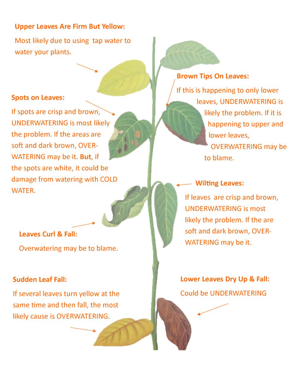 1 Reason House Plants Die Revealed Edible Walls In 2020 Plants House Plant Care Plant Care