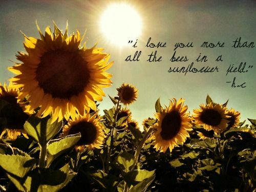 Sunflower Sayings And Quotes by quotesgram Flower