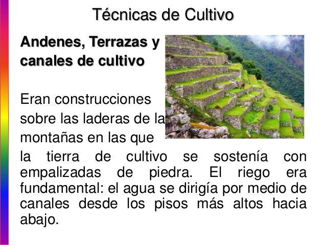 Técnicas De Cultivo Andenes Terrazas Y Canales De Cultivo