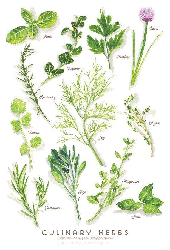 Culinary Herbs Water