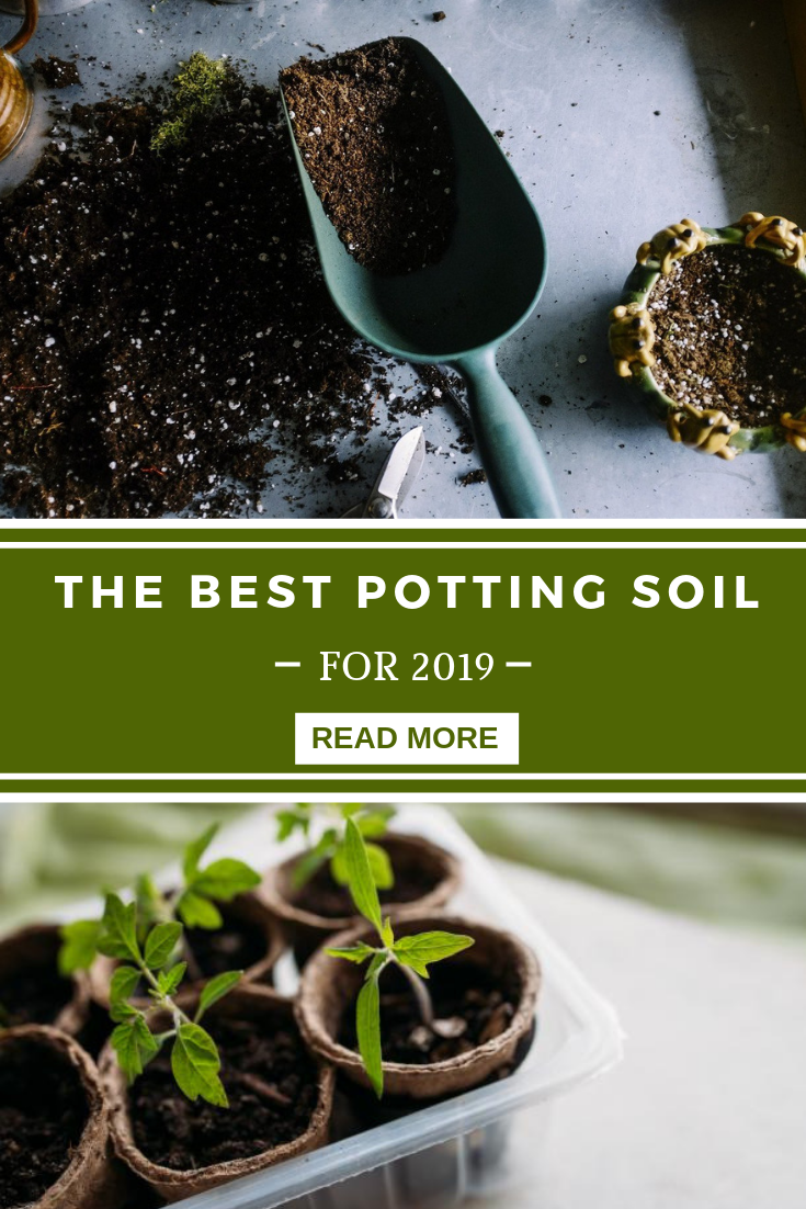 Pinterest & Best Potting Soil For Indoor Plants | Gardening Tips ...
