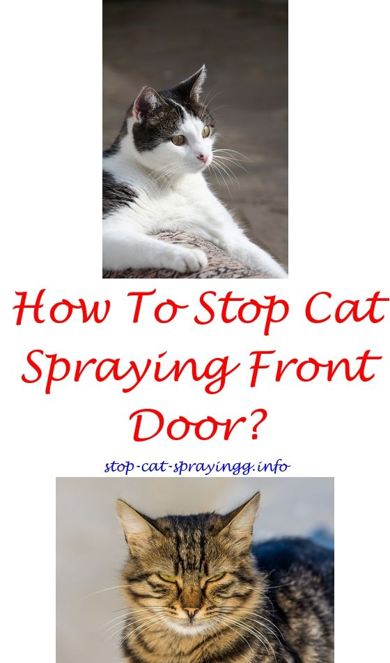 Male Cat Peeing In House Male Cat Spray How To Stop Your Cat From