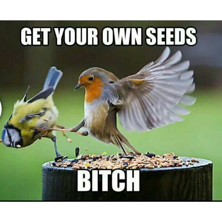 Hahaha!!! | Bones funny, Funny birds, Funny animal pictures