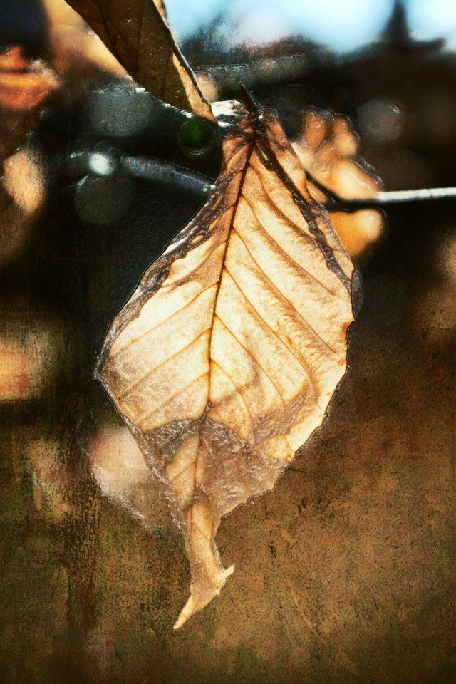 """""""Dried Leaf"""" - part of the Textures Series from 7:10 Studio Photography."""