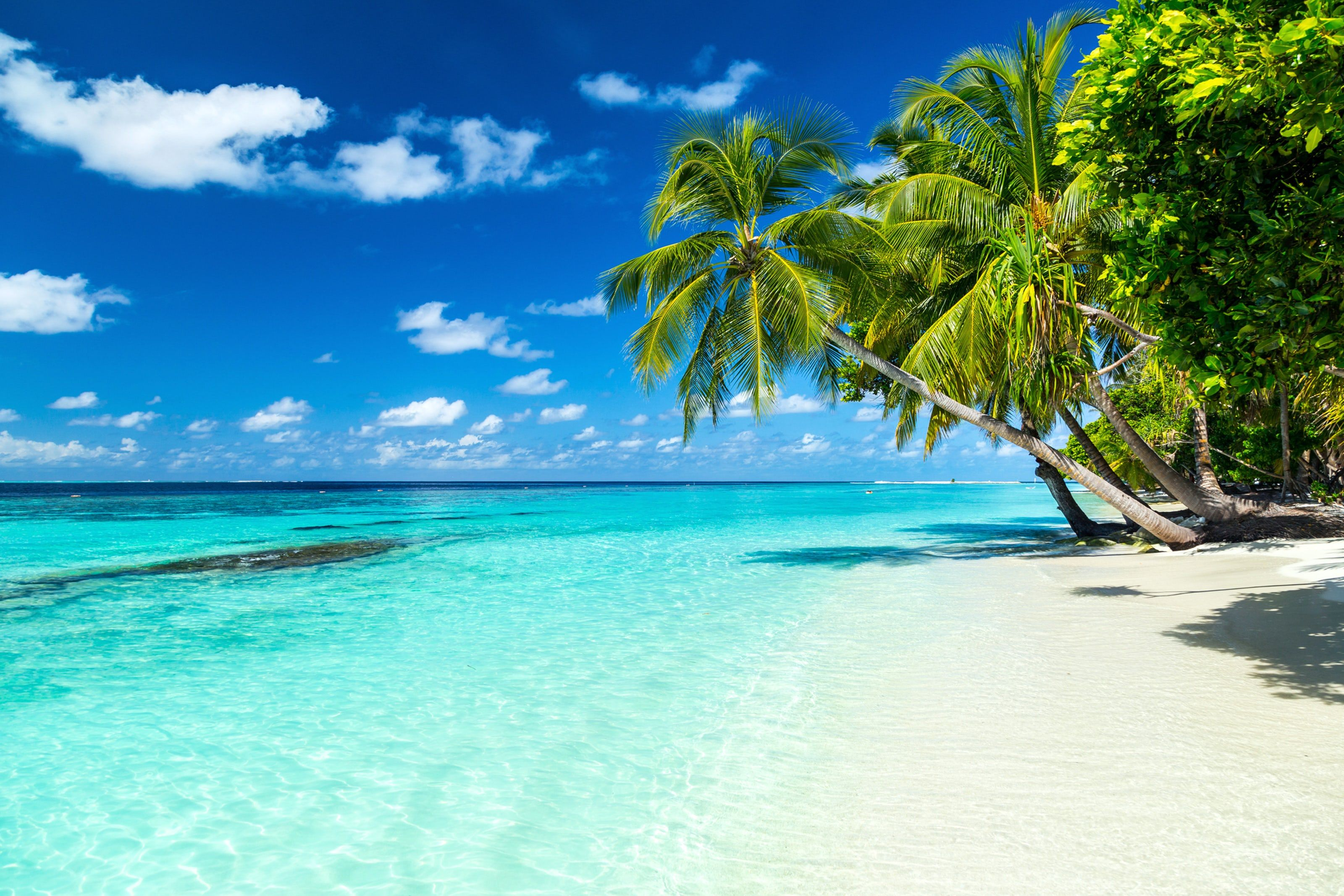Maldives Stunning Views Above Below The Water Tropical Paradise Beach Beach Paradise Island Vacation