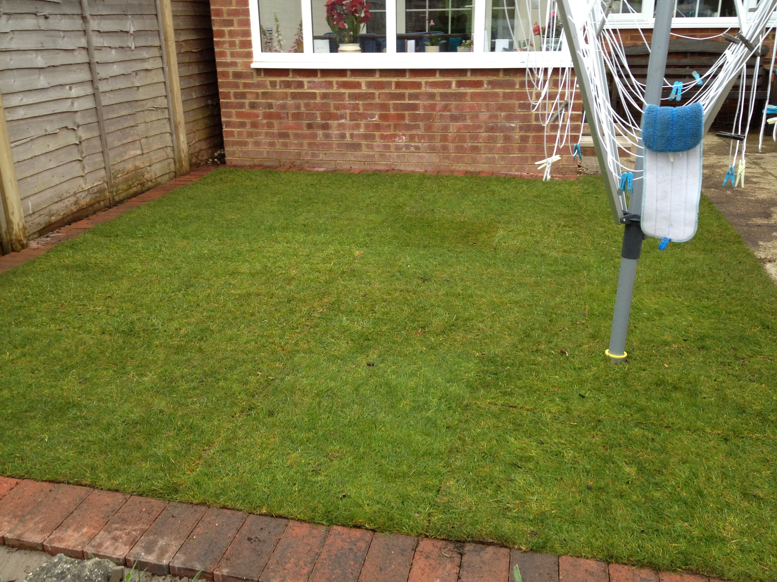 New Post Turfing Recent garden project 20m2 on TIDY GARDENS