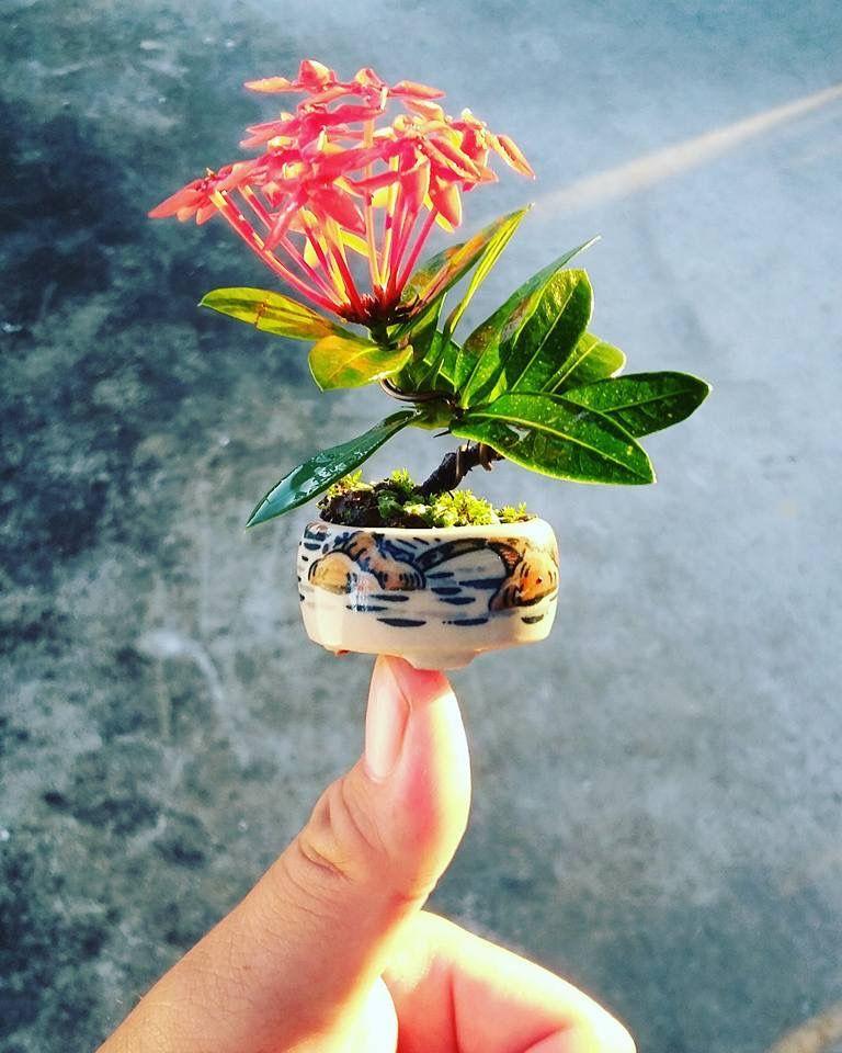 320 Tiny Flower Pots Ideas Flower Pots Tiny Flowers Mini Bonsai