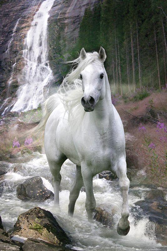 Pferde Poster Schimmel