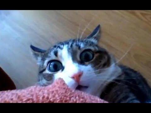 Best Of Funny Cats Gatti Pazzi E Divertenti 2013 Funny Funny
