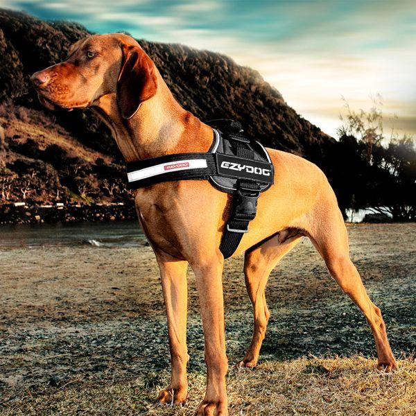 Ezydog Convert Dog Harness Charcoal Lifestyle Dog Harness