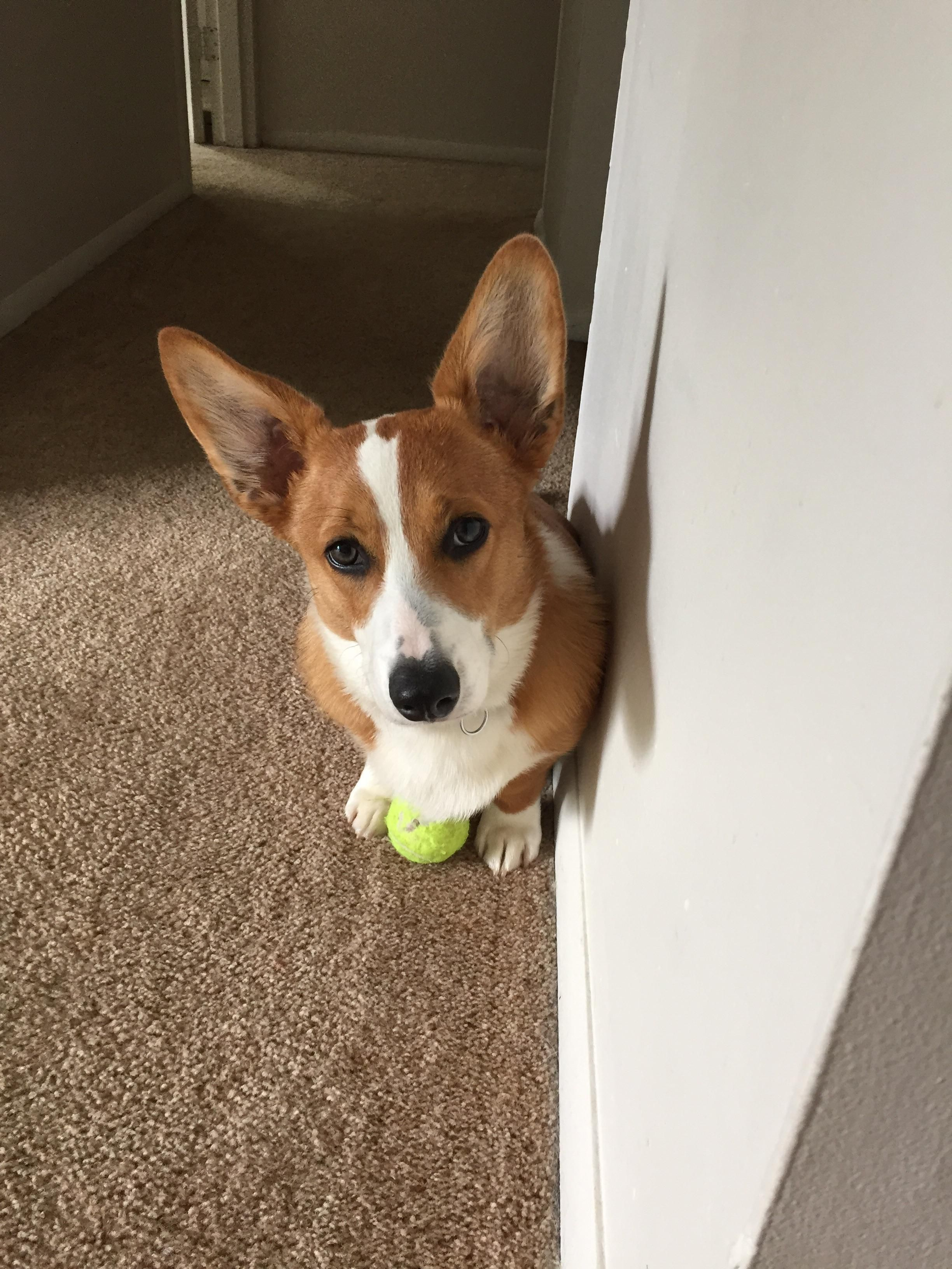 This Is My Tennis Ball There Are Many Like It But This One Is