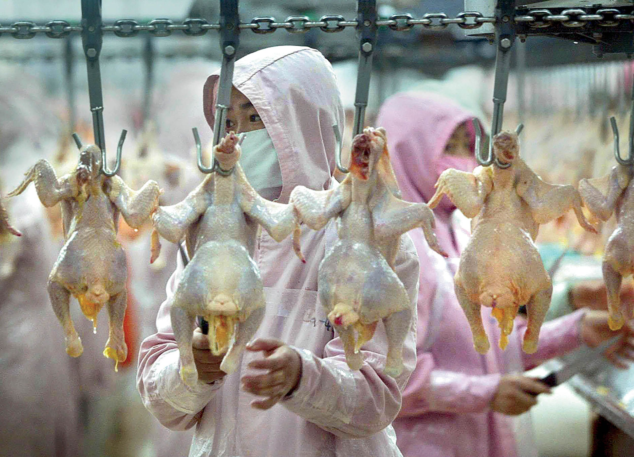 The Curious Case of the Chinese Chicken Import-Export Business