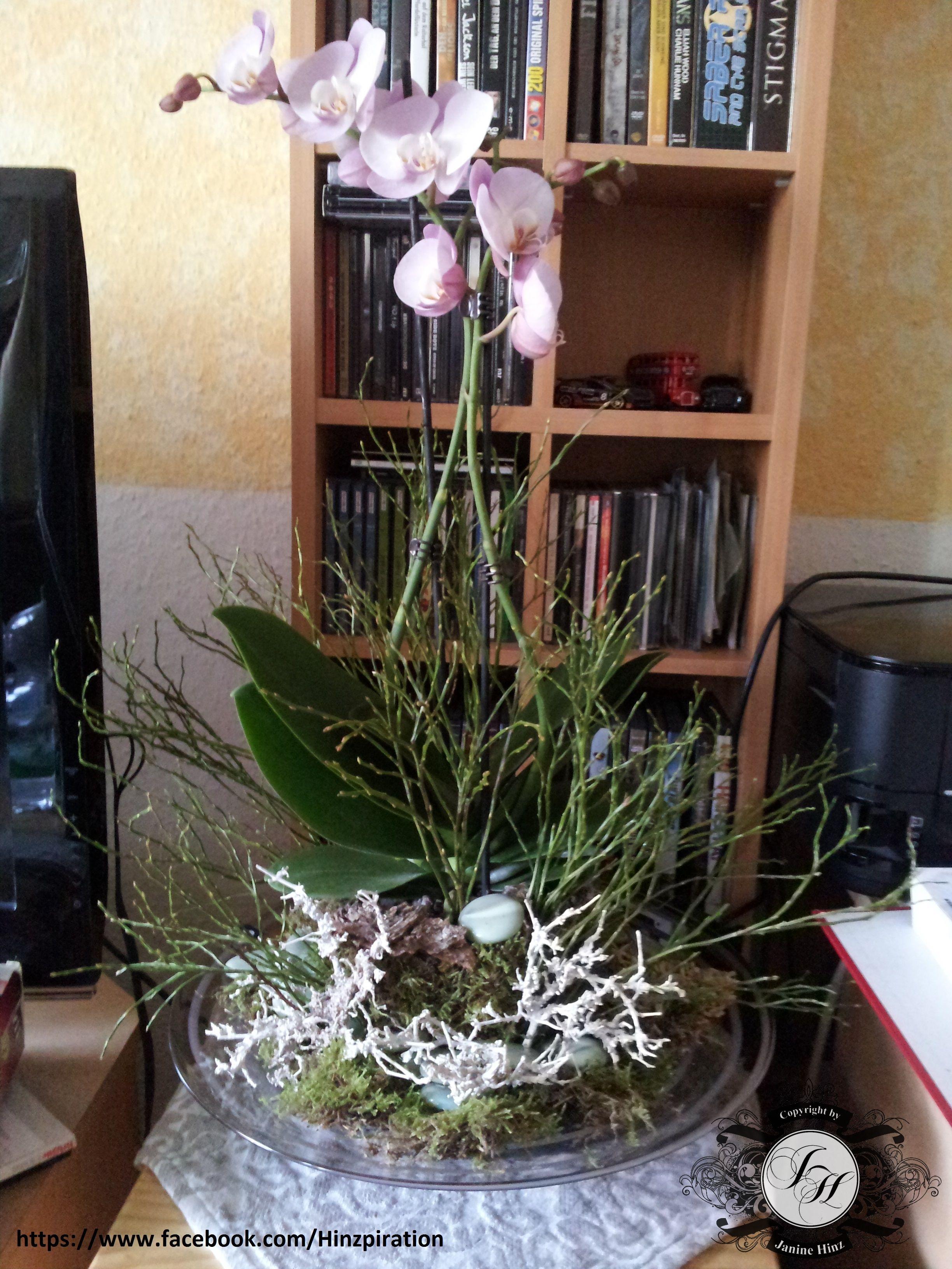 Photo of Orchideenschale