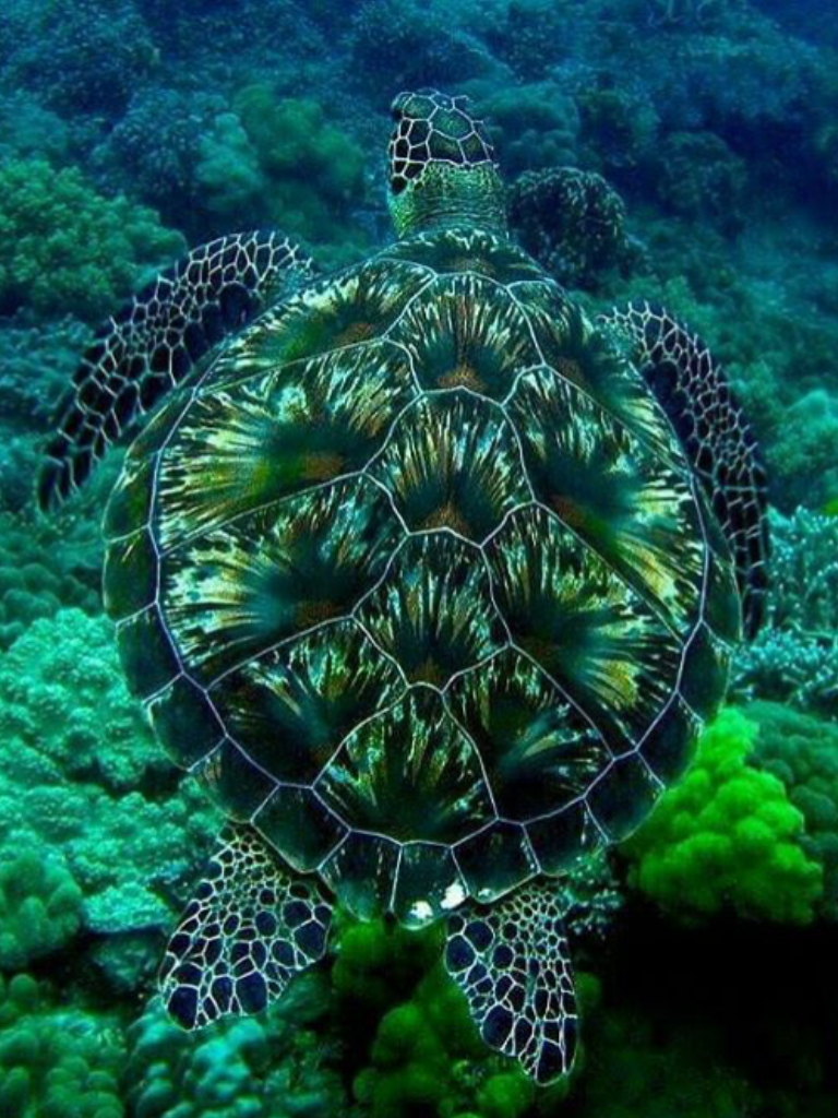 - I Really Like This Image Because The Colors On The Turtles Shell