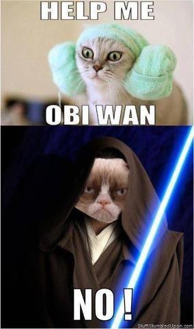 Grumpy Cat In Star Wars Funny Grumpy Cat Memes Grumpy Cat Humor Grumpy Cat Meme