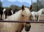 A Visit To White Stallion Guest Ranch – Among Southern Arizona's Best