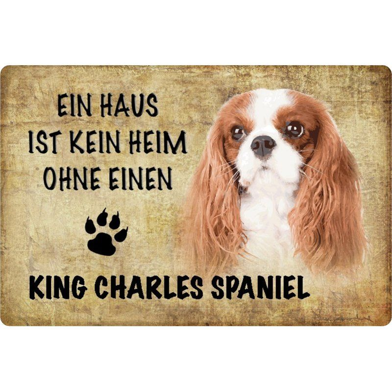 55 Cocker Spaniel X Cavalier King Charles In 2020 With Images Cavalier King Charles