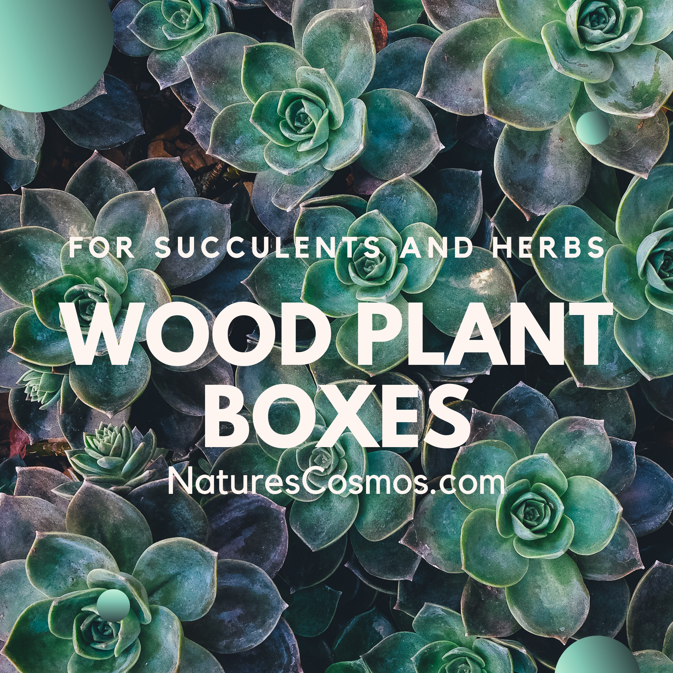 Plant Boxes Plant your favorite herbs and succulents in our vintage wooden plant box. Set it in your kitchen window or out on your porch! Plant Boxes Plant your favorite herbs and succulents in our vintage wooden plant box. Set it in your kitchen window or out on your porch! Plant your favorite herbs and succulents in our vi