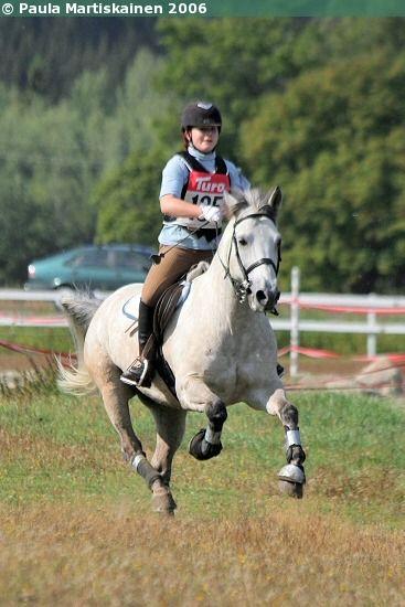 Estonian Native gelding Rumm