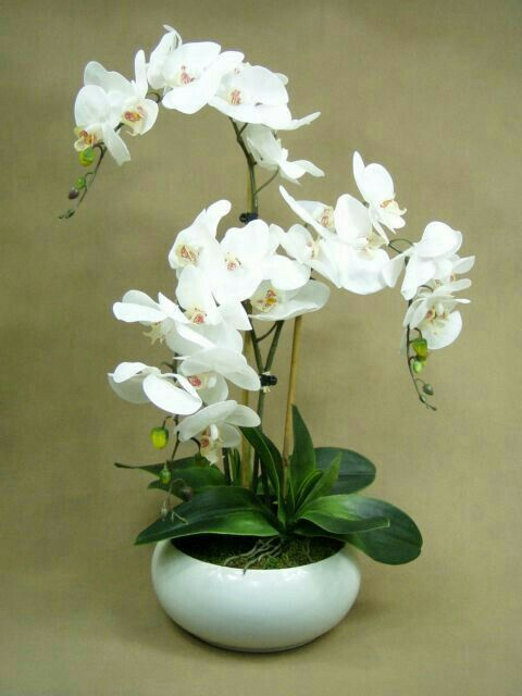 Pin de my anh en white romantic pinterest arreglos for Orquideas artificiales