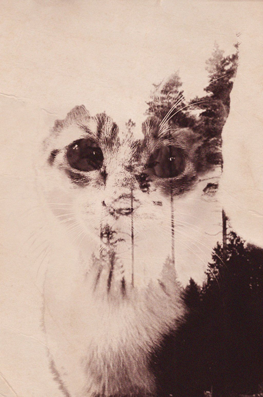 CAT Double Exposure by Arctech   Photography Exp.   Pinterest   By ...