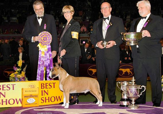 Best In Show 2006 Name: Ch Rocky Top's Sundance Kid Owner: Barbara Bishop & W F Poole & N Shepherd & R P Pool & Dorothy Cherry Breed: Bull Terrier (Colored)