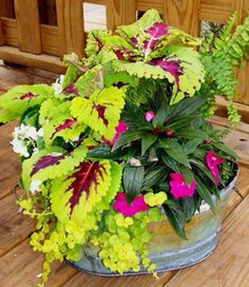 Shade To Part Shade Using Coleus is part of Container gardening flowers, Garden, Container flowers, Flower garden, Plants, Garden landscaping - Image source id pinterest com