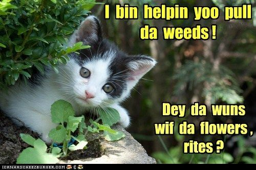 Helping Pull Weeds Funny Cats Funny Cat Memes Crazy Cats