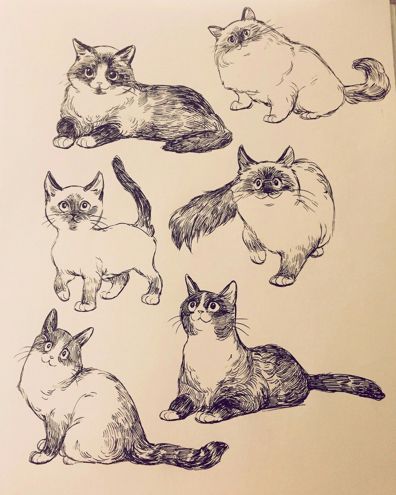 Pin By Pax On Sketch Animal Drawings Animal Sketches Cat Art