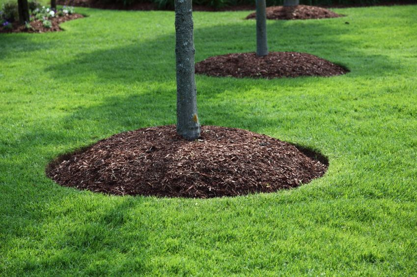 Garden Ideas Around Trees landscaping around trees plants ideas Mulching Around Trees Landscaping Gardening Pinterest