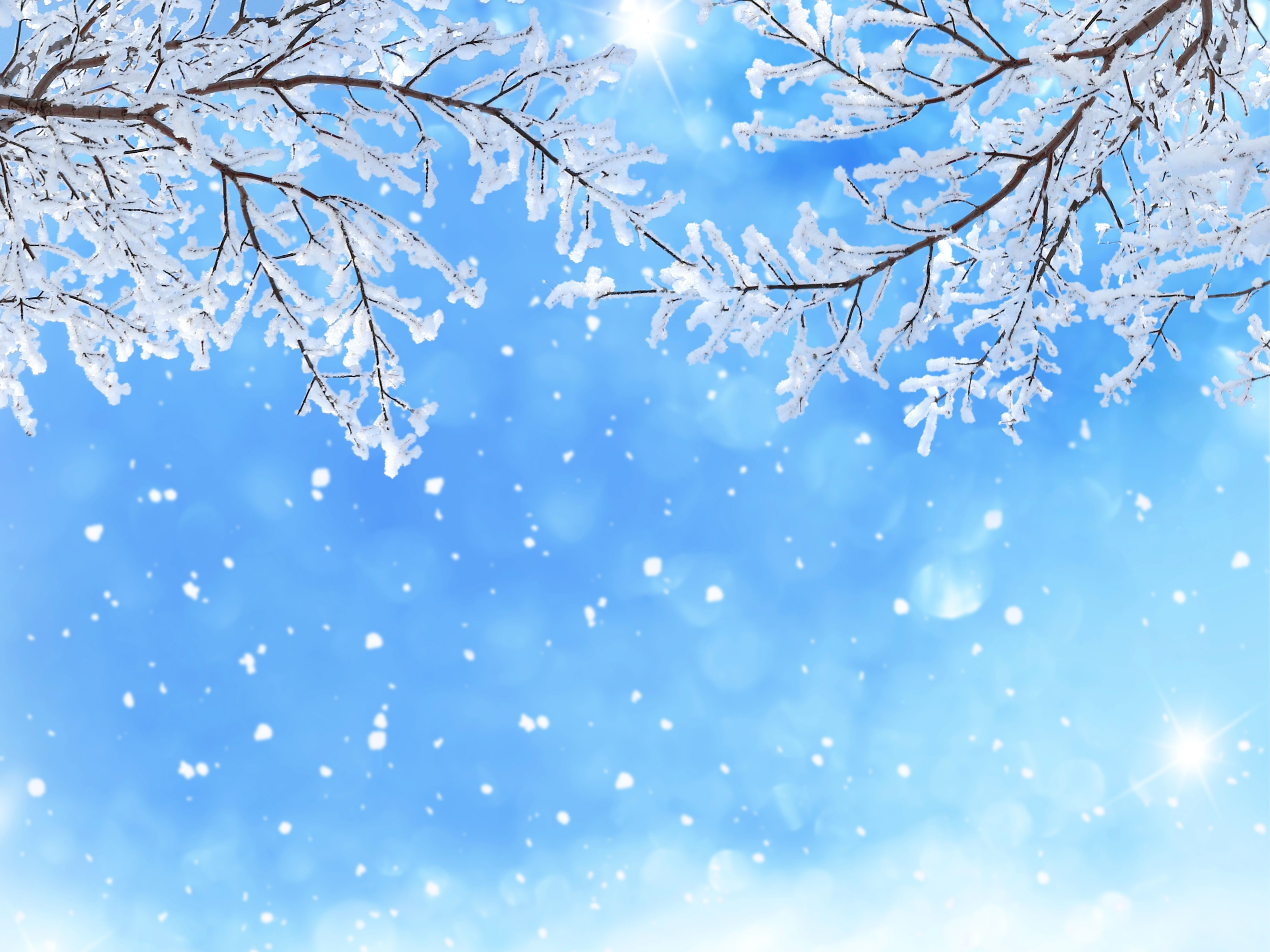 Branches Winter Snow 5k Snowfall 5k Wallpaper Hdwallpaper Desktop Winter Wallpaper Winter Snow Wallpaper Iphone Wallpaper Winter Hd wallpaper snow winter nature branches