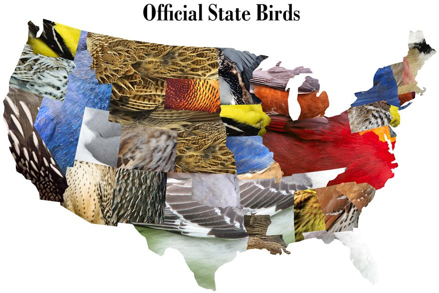 Official state birds State birds, Birds of america, Birds