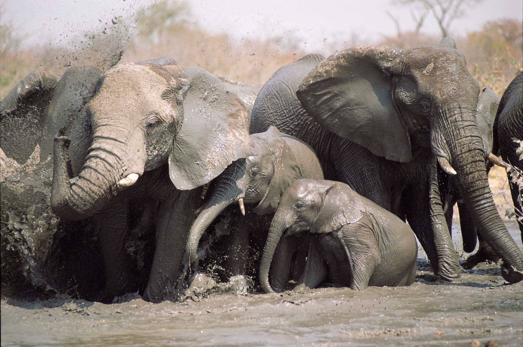 12. Elephants - 500 deaths a year Elephants are also responsible for a number of…