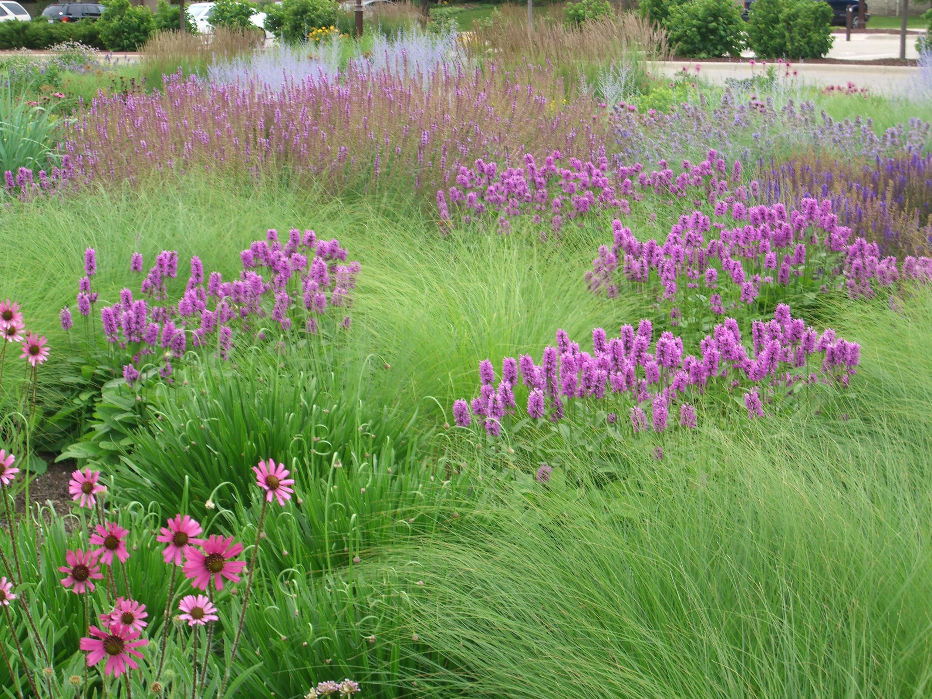 We create plant communities that grow well together and for Wild grass gardens