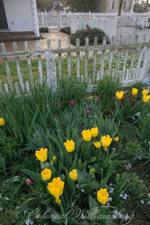 Colonial Williamsburg ~ Taliaferro-Cole Garden spring flowers. Williamsburg, Virginia.  Photo by David M. Doody.