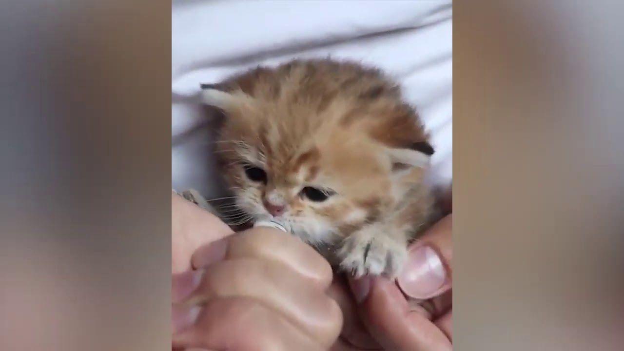 Lil Precious Kittens Cute Cat Gif Cats Baby Animals Super Cute