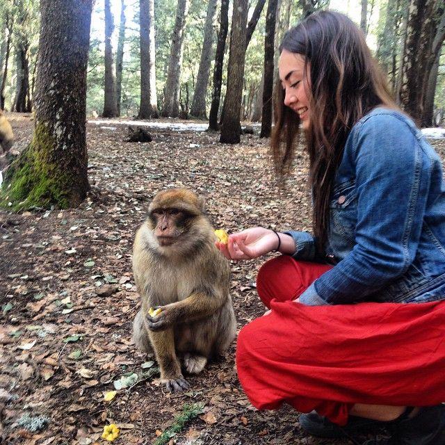 Feeding the Atlas Mountain monkeys   #morocco #marrakesh #fes #chefchaouen #assilah #atlas #mountains #monkeys #sahara #desert #travel #north #africa #traveller #instatravel #explore #wanderlust #adventure #traveltheworld #travelblog #triplookers