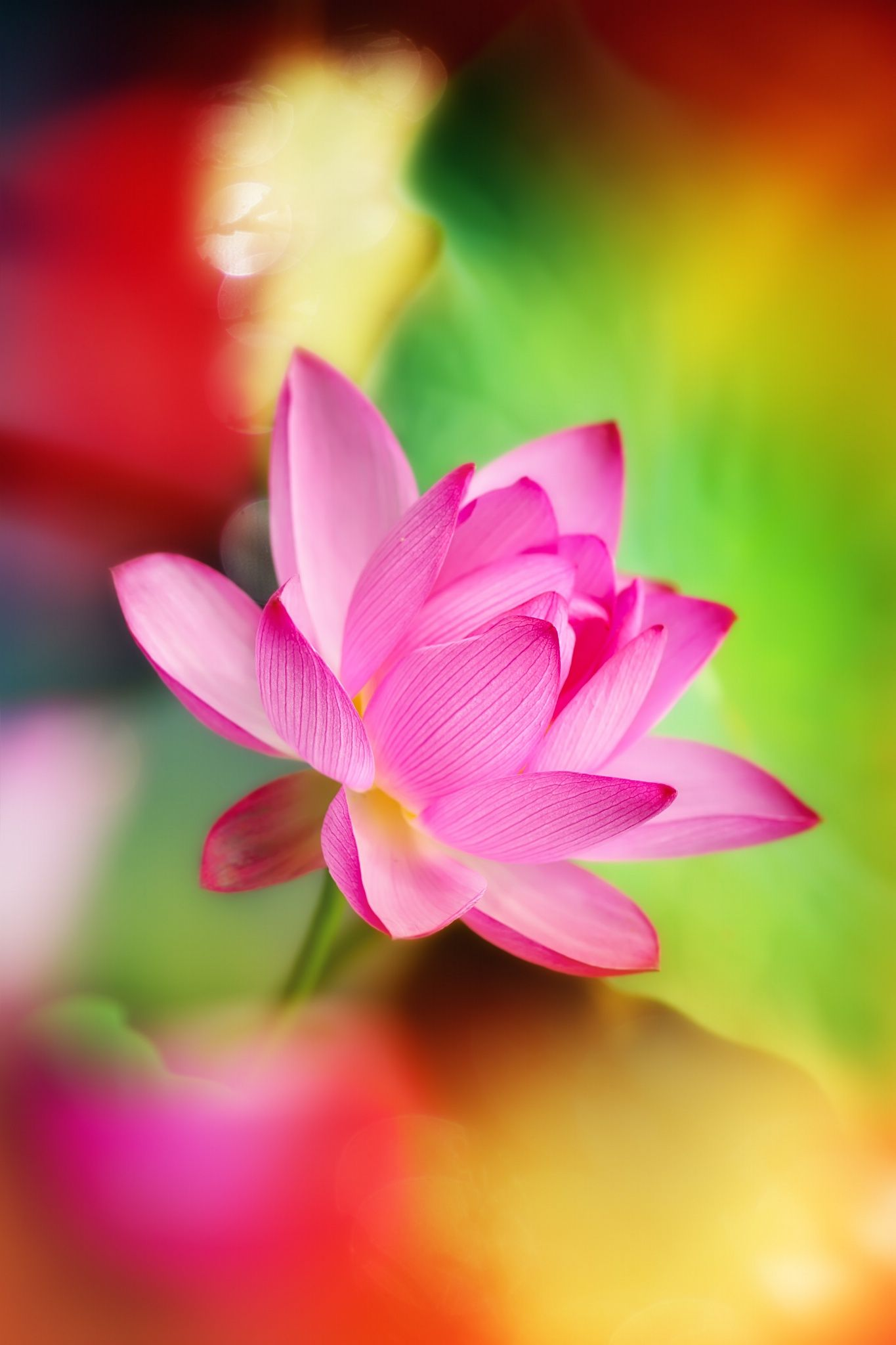 Lotus flower by fuyi chen on 500px flowers water lotus flower by fuyi chen on 500px mightylinksfo