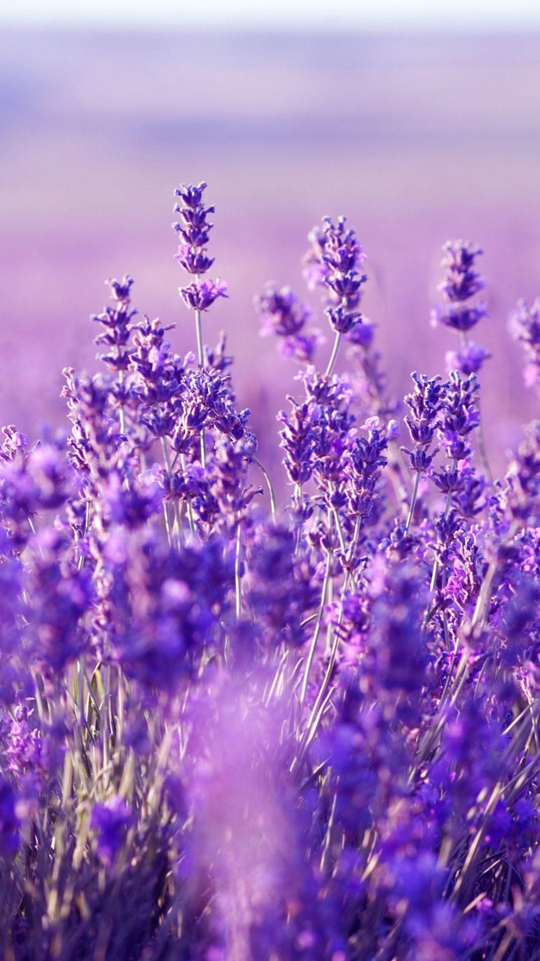 73 Lavender Flower Wallpapers On Wallpaperplay Purple Flowers Wallpaper Flower Aesthetic Purple Flowers