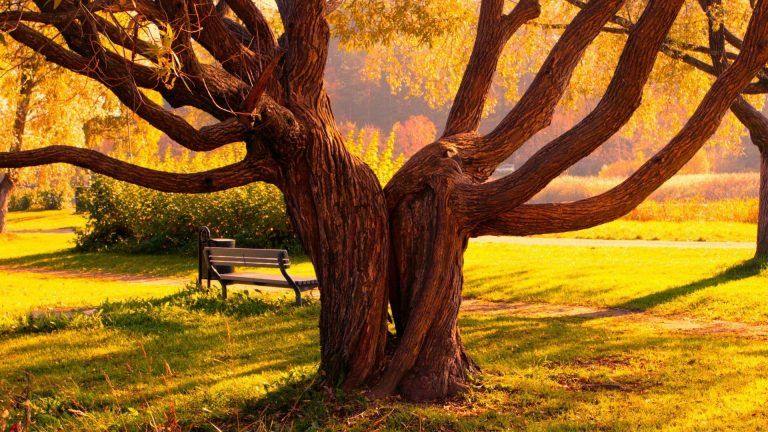 Grass Love Nature Trees 1920x1080 Wallpaper Nature Wallpaper Nature Images Love Wallpaper
