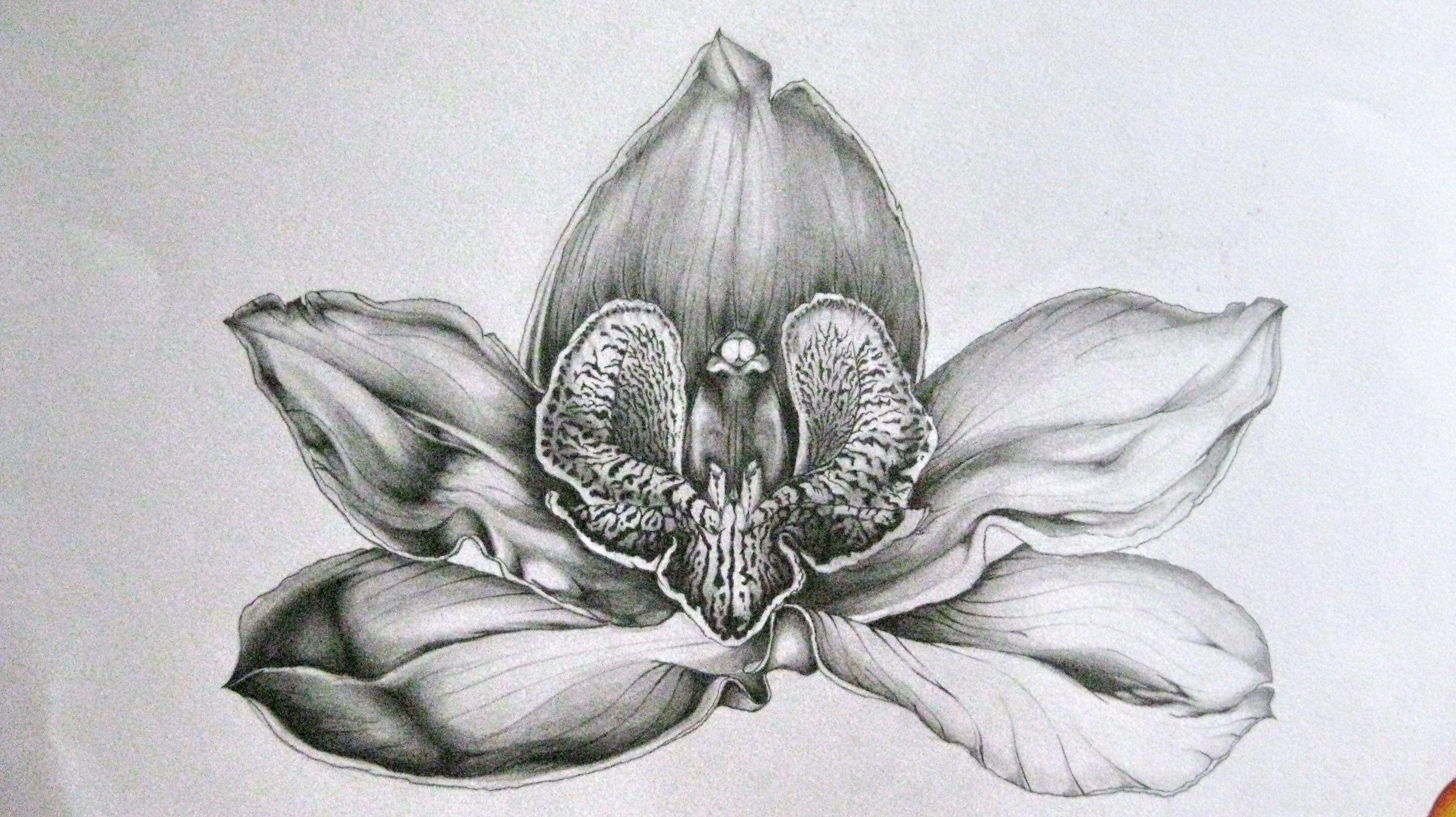 44+ Tatouage orchidee noir et blanc inspirations