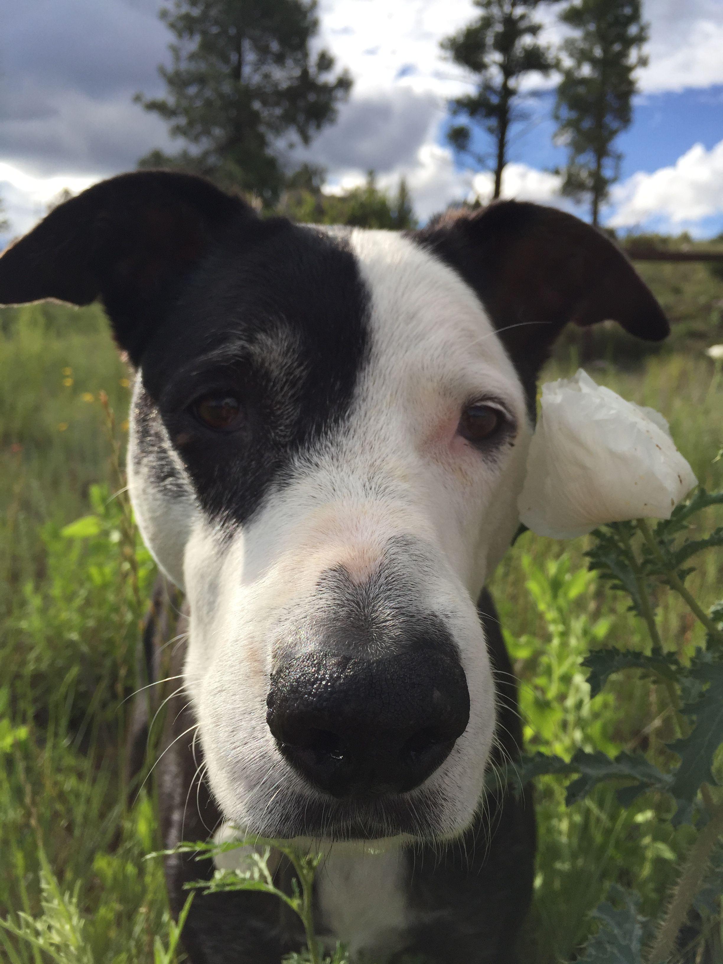 My border collie mix. JD Smartest dogs, Dog names