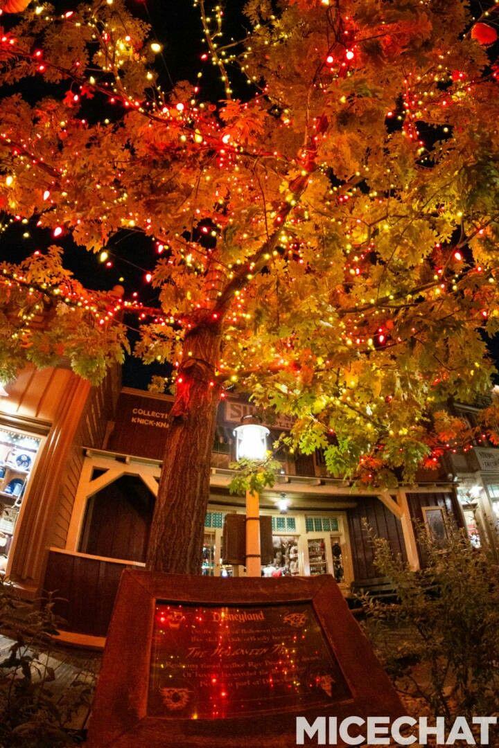Halloween tree , Frontier Land , Disneyland 2019