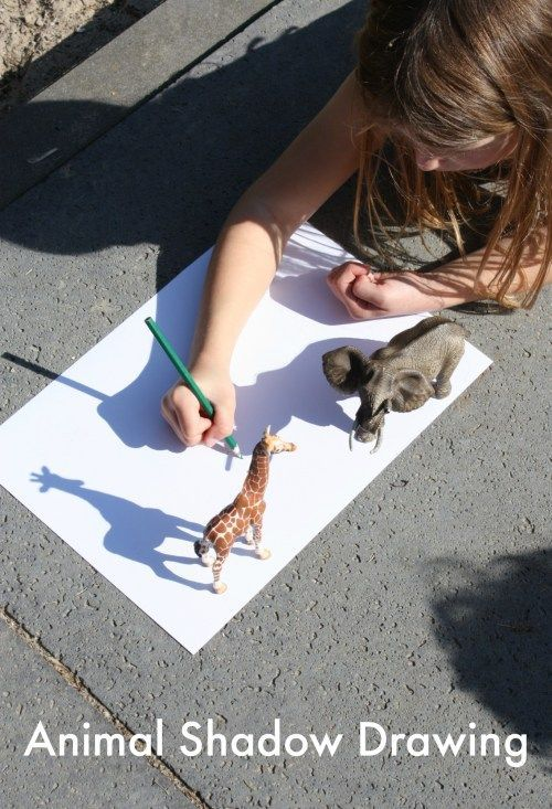 Animal Shadow Drawing - Emma Owl