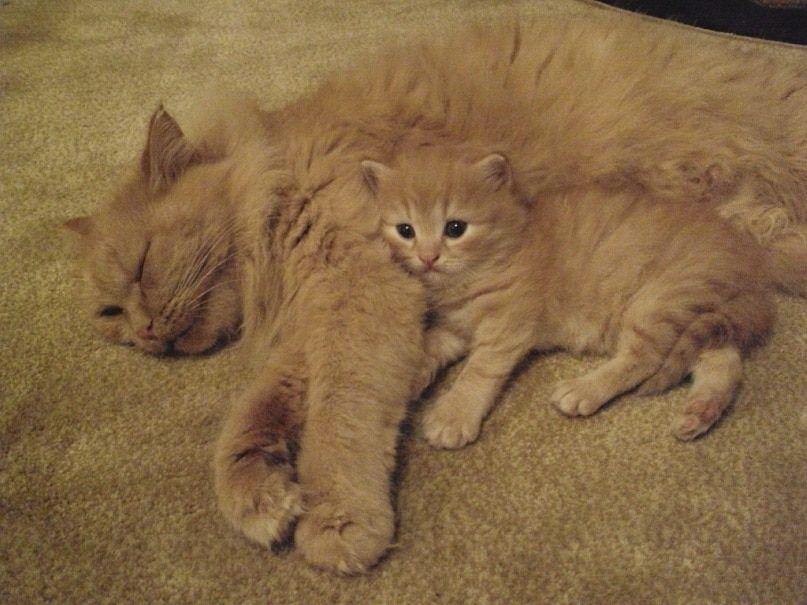猫の親子 34|ねこLatte+