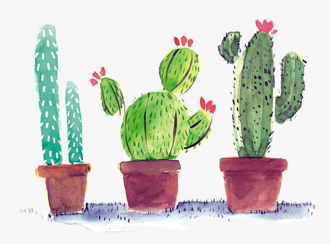 Watercolor Cactus Watercolor Clipart Hand Painted Cactus Watercolor Png Transparent Clipart Image And Psd File For Free Download Watercolor Cactus Cactus Images Cactus