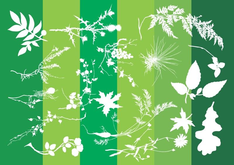 Google Image Result for http://epspark.com/images/800/plants-silhouettes-nature-graphics.jpg