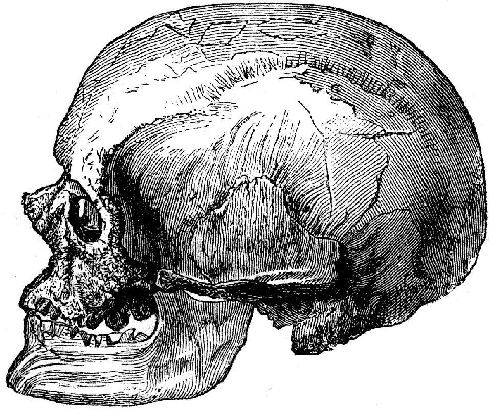 The Pagan Ape Cro Magnon Oldest Human Prehistory