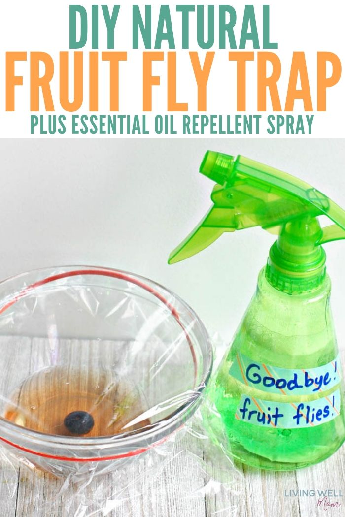 DIY Natural Fruit Fly Trap + Essential Oil Spray