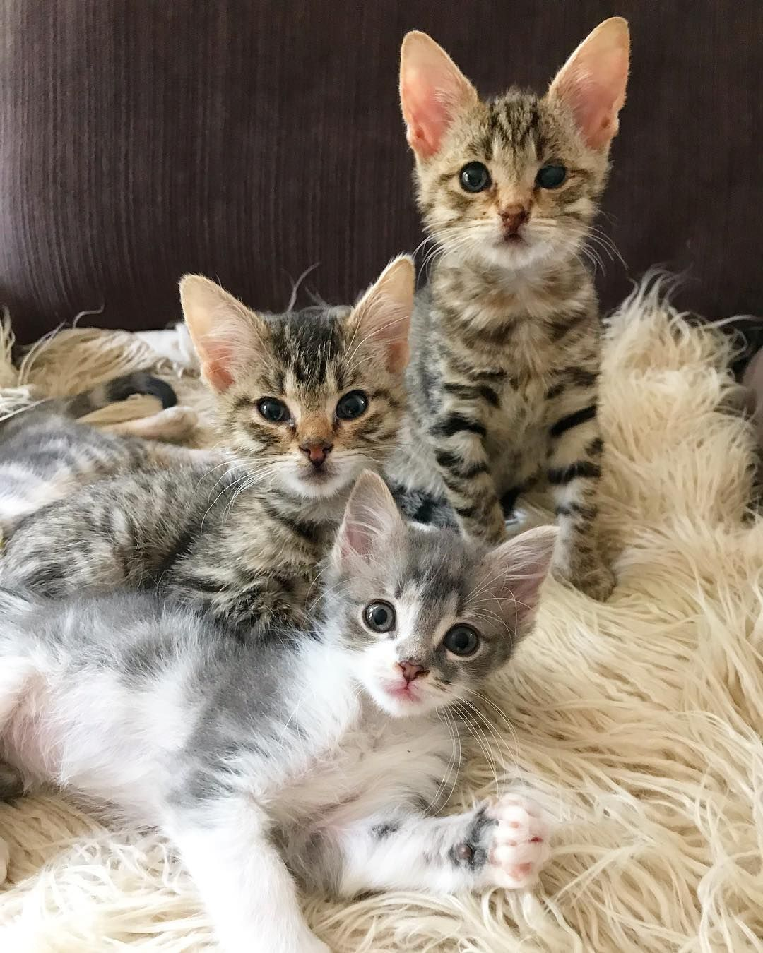 Pin On Cats Miscellaneous